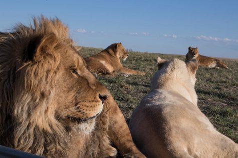 The value of sanctuaries, rehabilitation centers for wildlife